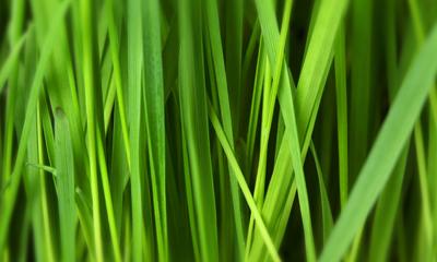 green grass Geotermia: riscaldamento e raffrescamento dalla terra
